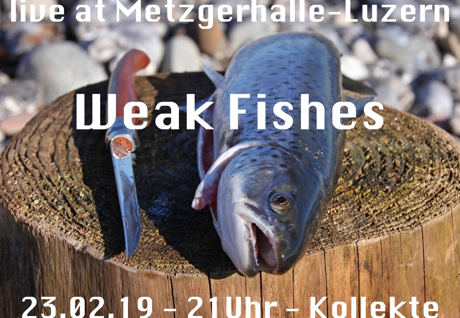 flyer-konzert-weak-fishes-23.02_.2019_.jpg